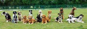 cani di socializzazione